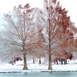 Robert ONeil - Ducks on a Winter Pond