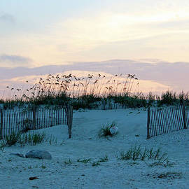 Cynthia Guinn - Dunes At Pawleys Island