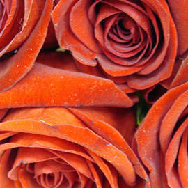 Dusty Roses by Ira Shander