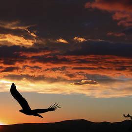 Shane Bechler - Eagle at Sunset