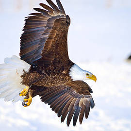 Eagle Landing by Greg Norrell