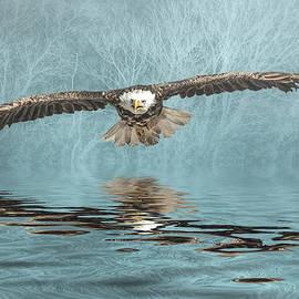 Brian Tarr - Eagle on Misty Lake