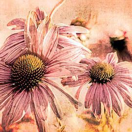 Bob Orsillo - Echinacea Impressions