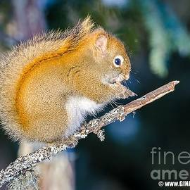 Squirrel by Gina Levesque