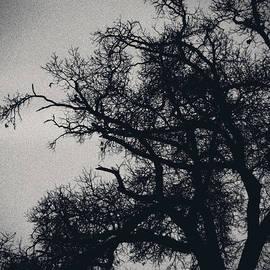 Christy Ricafrente - Eerie Silhouette