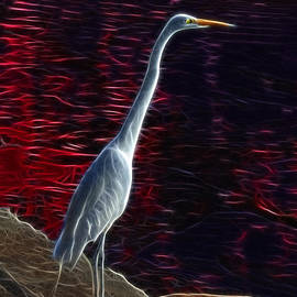 Egret - 3678 F by James Ahn
