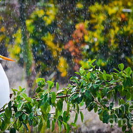 Egret In Paradise  by Gary Keesler