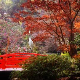 Lynn Bauer - Egret in the Japanese Garden