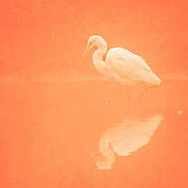 Egret in the tone of orange by Ruth Jolly