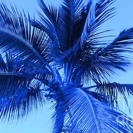 Electric Blue Palm Tree by Timothy Curtin