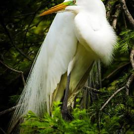 ELEGANCE of NATURE by Karen Wiles