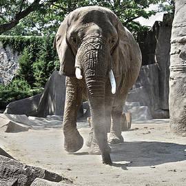 Airestudios Photography - Elephant