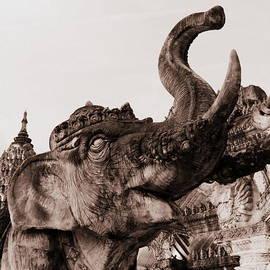 Ramona Johnston - Elephant Architecture