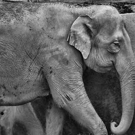 Elephant Details by Dan Sproul