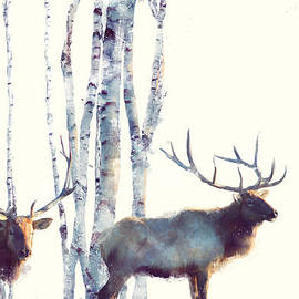 Elk // Follow by Amy Hamilton