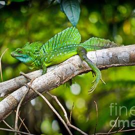 Gary Keesler - Emerald Lizard - Costa Rica