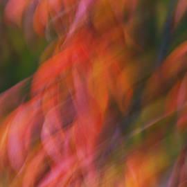 Rachel Cohen - Emotion in Color
