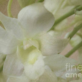 Enchanting by Arlene Carmel