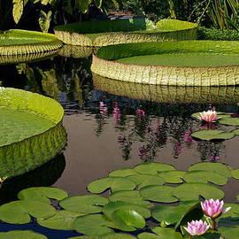 Enchanting Water Garden by Byron Varvarigos