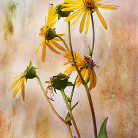 End Of Summer Bouquet by Sue Capuano