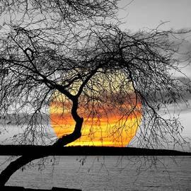 Brian Chase - English Bay Sunset