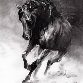 Paul Davenport - Equine