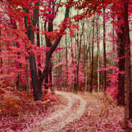 Brooke T Ryan - Ethereal Forest Path with Red Fall Colors