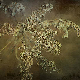 Terry Rowe - Even Weeds are Beautiful