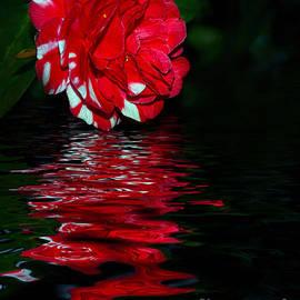 Kaye Menner - Evening Camellia Reflections by Kaye Menner