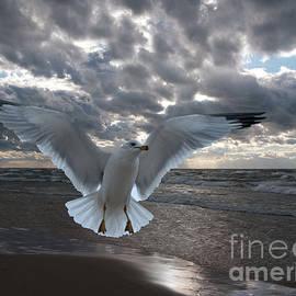 Evening Landing by Ann Horn