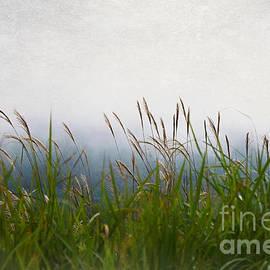 Evening Mist by Eena Bo