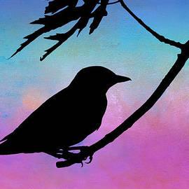 Evening Stillness - Bird - Silhouette by Nikolyn McDonald