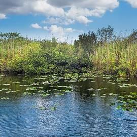 Everglades 0817 by Rudy Umans