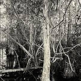 Everglades Swamp-1BW