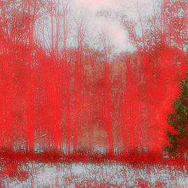 Evergreen by Steve Godleski