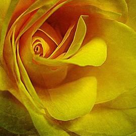 Shirley Sirois - Eye of Rose