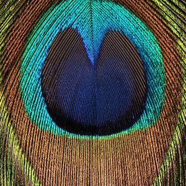 Eye of the Peacock #6 by Judy Whitton