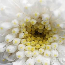 Wendy Wilton - Fade To White