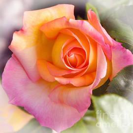 Debby Pueschel - Faded Variegated Rose