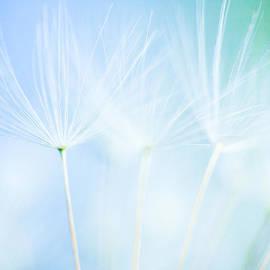 Lynne  Douglas - Fairy Dancers