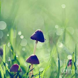 Fairy Garden by Sylvia Cook