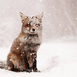 Fairytale Fox _ Red Fox in a Snow Storm by Roeselien Raimond
