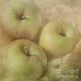 Pam  Holdsworth - Fall Harvest