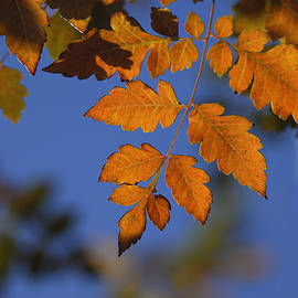 Guido Montanes Castillo - Fall leaves