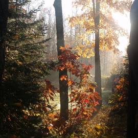 Fall Leaves in Morning by Susan Buscho