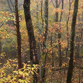 Fall Mist by Chad Dutson