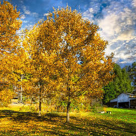 Fall Trees at the Farm by Debra and Dave Vanderlaan