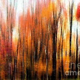Tom Gari Gallery-Three-Photography - Fall Trees of Bucks County