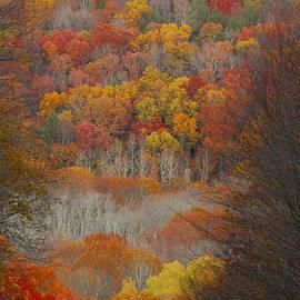 Fall Tunnel by Raymond Salani III