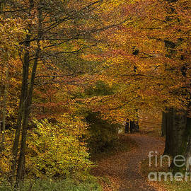 Inge Riis McDonald - Fall walk